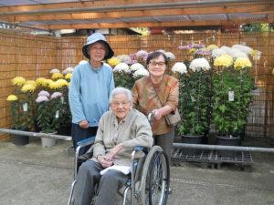 菊の花見学
